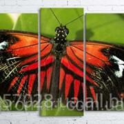 Модульна картина на полотні Метелик код КМ100200(176)-003 фото