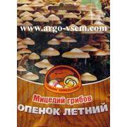 Мицелий Опят (летних). Купить мицелий Опят. Мицелий грибов почтой фото
