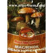 Мицелий Масленка. Мицелий грибов почтой фото