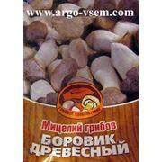 Мицелий Боровика. Купить мицелий Боровика. Мицелий грибов почтой фото