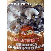 Мицелий Вешенки. Купить мицелий Вешенки. Мицелий грибов почтой фото