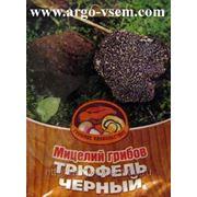 Мицелий Трюфеля. Купить мицелий Трюфеля. Мицелий грибов почтой фото