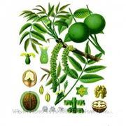 Грецкого ореха лист, листья, 50г фото