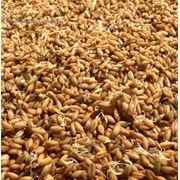 Сушка при влажности зерна свыше 191% за каждый тонно-процент снятия влажности (овёс рожь ячмень) фото