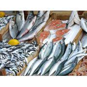 Хранение рыбной продукции фото