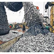 Переработка рыбы переработка фото