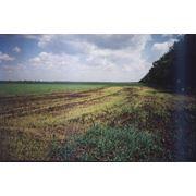 Очистка резервуаров грунтов и других объектов от нефтепродуктов фото