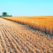 Пшеница на экспорт - Агросфера БМ фото