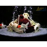 Рыбный аквариум фото