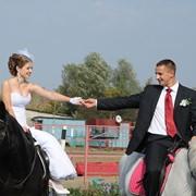 Жених на белом коне. фото