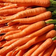 Морковь свежая оптом. Лук репчатый оптом. Капуста пекинская оптом. Украина, Харьков, Днепропетровск фото