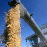 Отгрузка зерновых и масличных культур фото