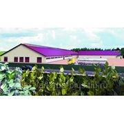 Здание Молочная ферма на 600 голов КРС фото