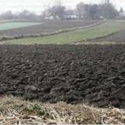 Услуги по обработке земли, вспашка, дискование, культивация, посев, Николаевская область.