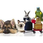 Услуги ветеринара фото