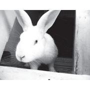 Профессиональное ветеринарное обслуживание фото