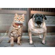 Стерилизация кошек и собак фото