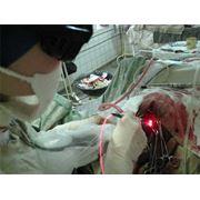 Санаторно-профилакторное лечение собак и кошек фото
