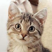Кастрация кота с учетом медикаментов фото