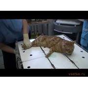 Стерилизация животных фото