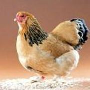 Лечение птиц фотография