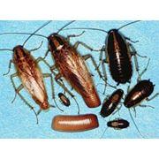 Услуги по уничтожению тараканов фото