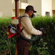 Оказание услуг по уничтожению блох клопов и мух фото