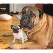 Оказание скорой медицинской помощи для домашних животных фото