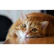 Кастрация кота фото