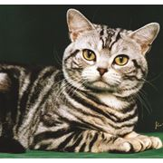 Удаление когтевых фаланг котам фото