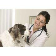 Оперативное лечение грыжи животных фото
