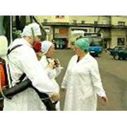 Медицинская дератизация фото