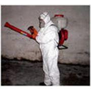 Дезинфекция квартиры против насекомых фото