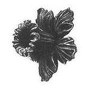 Цветок на ножке фото