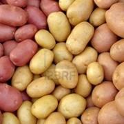 Бардымские овощи фото