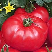 Семена томатов Турмалин фото