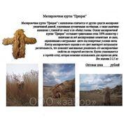 фото предложения ID 2508976