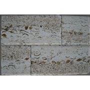 Плитка из камня «Ракушечник крупнопористый бежевый» фото