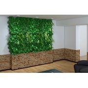 Озеленение офисов, ресторанов,квартир и домов