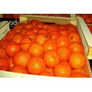 Услуги по организации экспорта фруктов фото