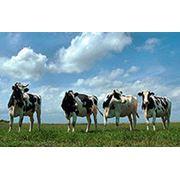 Геомониторинг в сельском хозяйстве фото