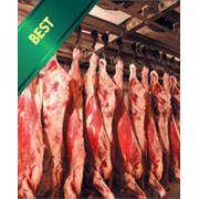 оптовые поставки мяса фото
