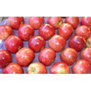 Поставка фруктов фото