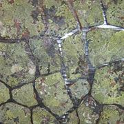 Натуральный камень песчаник кварцитопесчаник темно-красный с лишайником фото