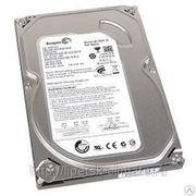Жесткий диск ST31000524AS фото