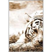Печать фотографий 21х297 (А4) глянцевая 210 г/м2 фото