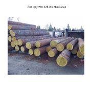 Лес кругляк сиб лиственница