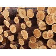 Купить лес кругляк г кричев