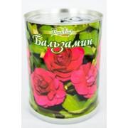 Бальзамин Bontiland растение в банке, (410503) фото
