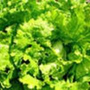 Салаты зеленый нежный фото